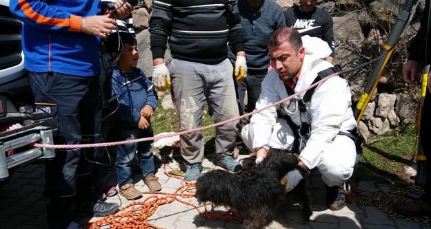 Kuyuya Düşen Köpeği AFAD Kurtardı