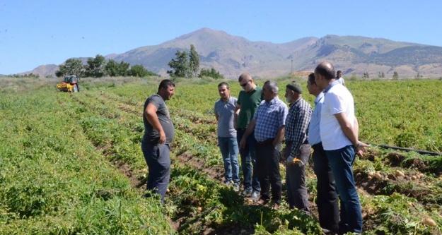 Tarım müdürü patates hasadını yerinde inceledi