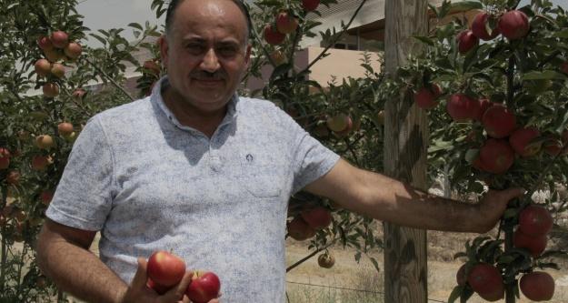Niğde'den Hindistan'a ve İngiltere'ye elma