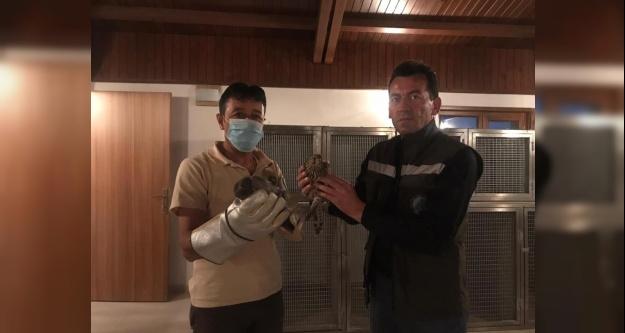 Bakıma muhtaç halde bulunan kuşlar tedavi altına alındı