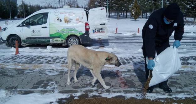 Niğde belediyesinden sokak hayvanlarına mama desteği