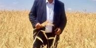 """Gürer: Buğdayda tehlike çanları çalıyor"""""""
