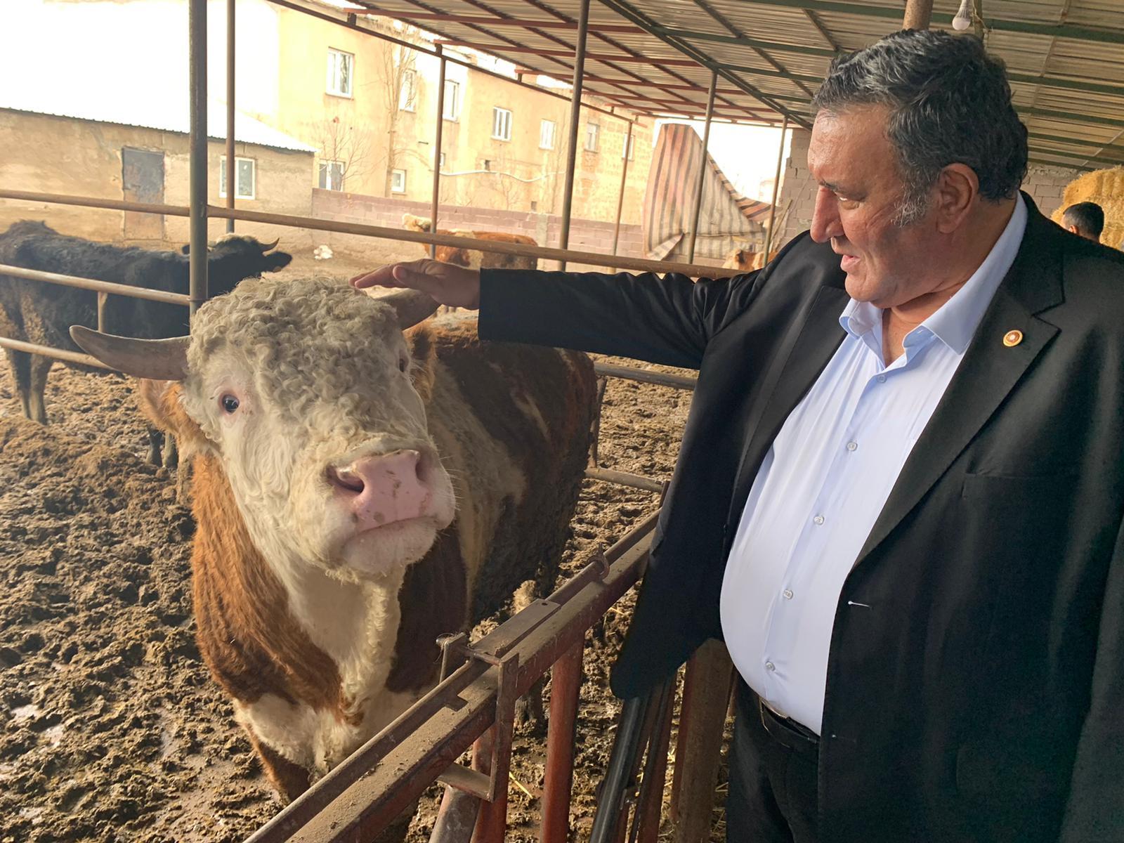 """Gürer, 'Yem fiyatlarındaki artış hayvancılığı tehdit ediyor"""""""